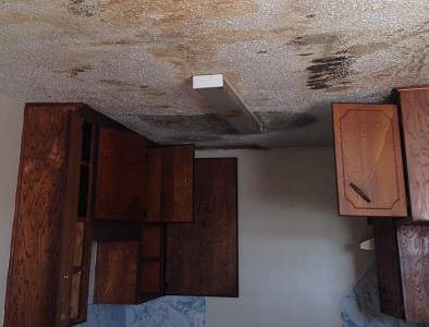Mold Removal in Pflugerville Texas